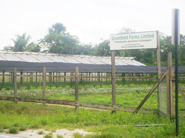 Greenfield s state of the art farming aims for overseas for Greenfield farm