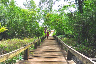 The wooden walkway leading to the Kumaka landing.