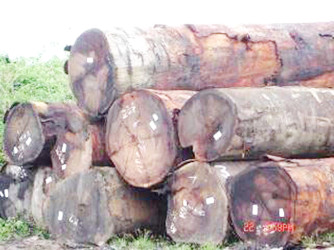 Logs for export