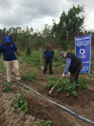Canadian High Commissioner Pierre Giroux (right) assisting on one of the farms.