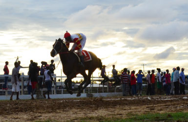 Release The Beast from the Jumbo Jet Racing Stables with Colin Ross in the stirrups galloping to victory yesterday at the Bush Lot United Turf Club. (Orlando Charles photo)