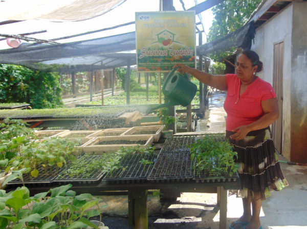 Khemwattie Ramnarine watering plants in the nursery section of the shade house